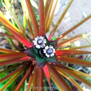 Tribal Stud Earrings Flowers (up-cycled)
